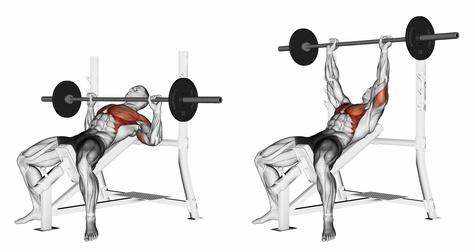 Incline bench press anatomical illustration